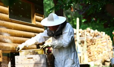 Szabadi Péter méhészet